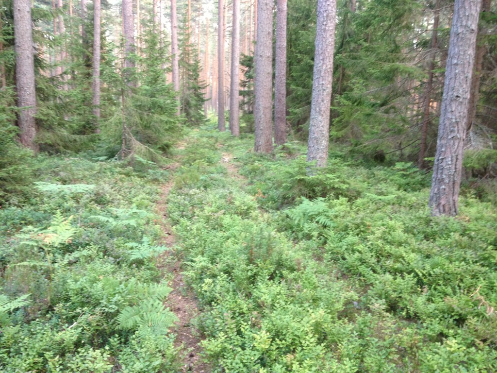 Efter ca 1,3 km uppe på mossbacken.